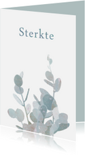 Sterkte kaart met eucalyptustak