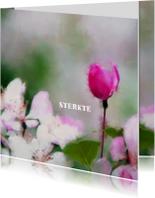 Sterkte kaarten - 14193 Sterkte Bloemen