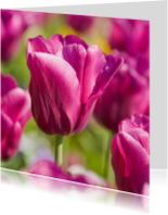 Bloemenkaarten - 4K donkerroze tulp