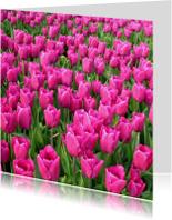 Bloemenkaarten - 4K Roze Tulpen