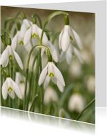Bloemenkaarten - 4K Sneeuwklokjes
