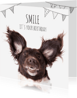 Verjaardagskaarten - A doggy birthday smile!
