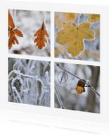 Ansichtkaarten - Ansichtkaart met natuur foto's