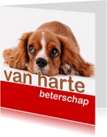 Beterschapskaarten - beterschapskaart met hondje