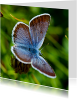 Dierenkaarten - Blauwe vlinder 2