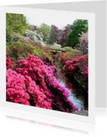 Bloemen Rododendron pracht