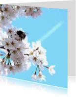 Bloemenkaarten - Bloemenkaart Bloesem Prunus 2
