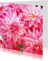 Bloemenkaarten - Bloemenkaart Dahlias