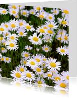 Bloemenkaarten - Bloemenkaart madeliefjes