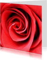 Bloemenkaarten - Bloemenkaart met prachtige roos