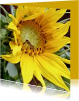 Bloemenkaarten - Bloemenkaart Zonnebloem 1 - OT