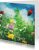 Bloemenkaarten - bloemenvel aan de akkerrand