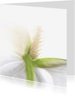 Bloemenkaarten - Bloemkaart witte kelk