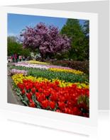 Bloemenkaarten - Bloesem en tulpen in de Keukenhof