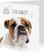 Verjaardagskaarten - Bull Dog verjaardag