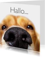Zomaar kaarten - Close up van hond-isf