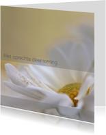 Condoleancekaarten - Condoleance met witte chrysant