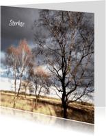 Condoleancekaarten - Condoleancekaart Berkenbomen