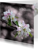 Condoleancekaarten - Condoleancekaart bloem sfeervol