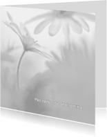 Condoleancekaarten - Condoleren met anemonen