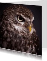 Dierenkaarten - Dieren kaart - Uil - Steenuil