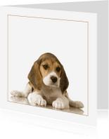 Dierenkaarten - Dierenkaart beagle Puppy