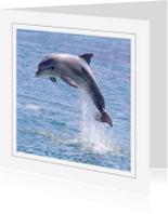 Dierenkaarten - Dierenkaart Dolfijn