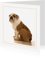 Dierenkaarten - Dierenkaart Engelse bulldog