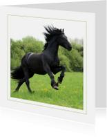 Dierenkaarten - Dierenkaart Fries paard