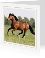 Dierenkaarten - Dierenkaart galopperend paard