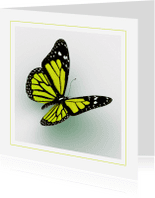 Dierenkaarten - Dierenkaart gele vlinder
