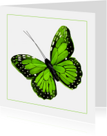 Dierenkaarten - Dierenkaart groene vlinder