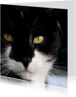Dierenkaarten - Dierenkaart Jip