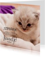 Dierenkaarten - Dierenkaart kitten zomaar