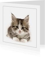 Dierenkaarten - Dierenkaart Kitten