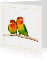 Dierenkaarten - Dierenkaart Kleurige parkieten