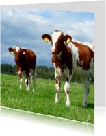 Dierenkaarten - Dierenkaart koeien - bruin