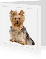 Dierenkaarten - Dierenkaart Lief hondje met strikje