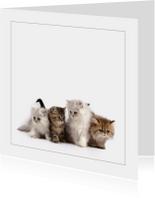 Dierenkaarten - Dierenkaart met kittens