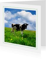 Dierenkaarten - Dierenkaart met koe