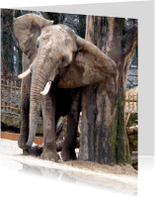 Dierenkaarten - Dierenkaart olifant met jeuk