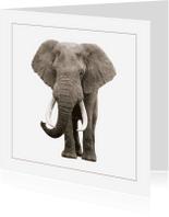 Dierenkaarten - Dierenkaart Olifant 3
