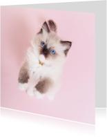 Dierenkaarten - Dierenkaart Roze - kitten staand - Kat