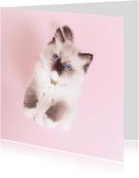 Dierenkaarten - Dierenkaart Roze - kitten staand