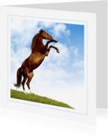 Dierenkaarten - Dierenkaart steigerend paard 2