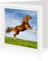 Dierenkaarten - Dierenkaart steigerend paard 3