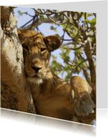 Dierenkaarten - Dierenkaart tijger in boom