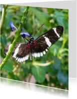 Dierenkaarten - Dierenkaart zwart met witte vlinder