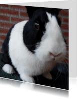 Dierenkaarten - Dierenkaart zwart wit konijn