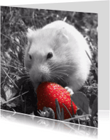 Dierenkaarten - Don't eat my strawberry - DH